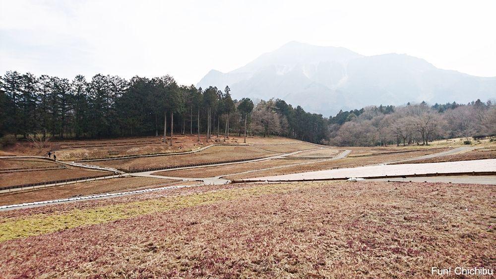 芝桜の丘の様子2017-03-01
