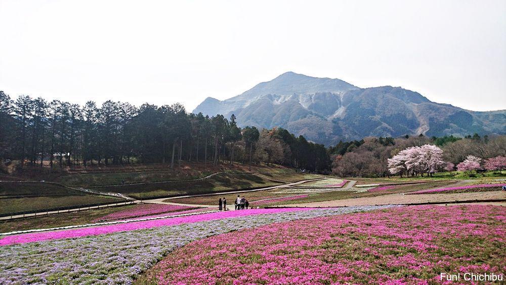 2017/04/10芝桜の丘