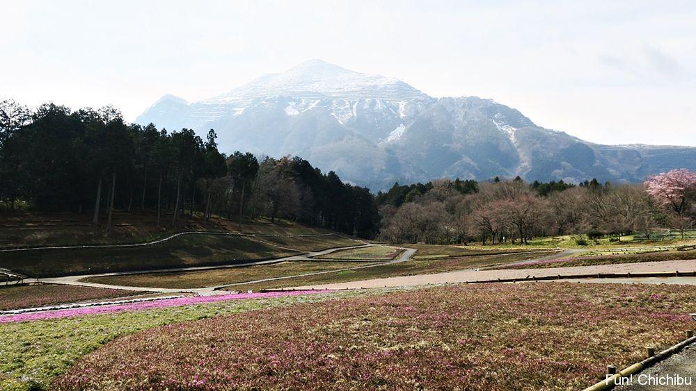 2017年4月1日の芝桜の丘