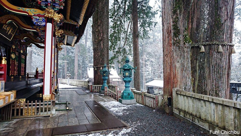 横から見た社殿と神木