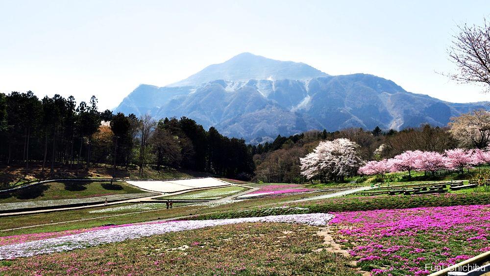 20180331芝桜の丘