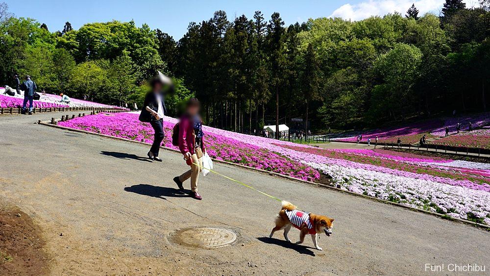 芝桜の丘ペット