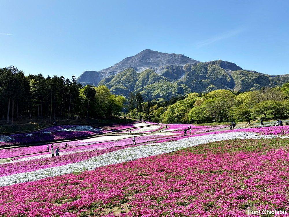20210422 芝桜の丘1
