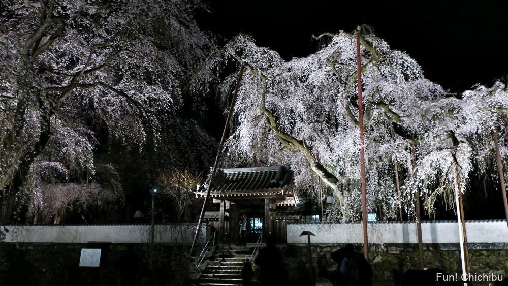 しだれ桜と清雲寺入り口