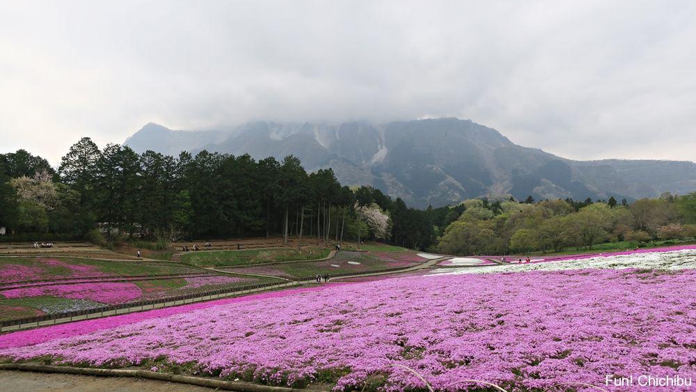 2017/04/21の芝桜の丘