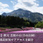 芝桜の丘(芝桜まつり)