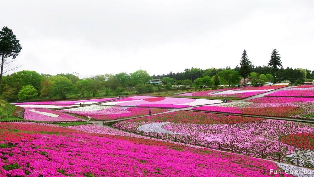 秩父芝桜の丘20190426