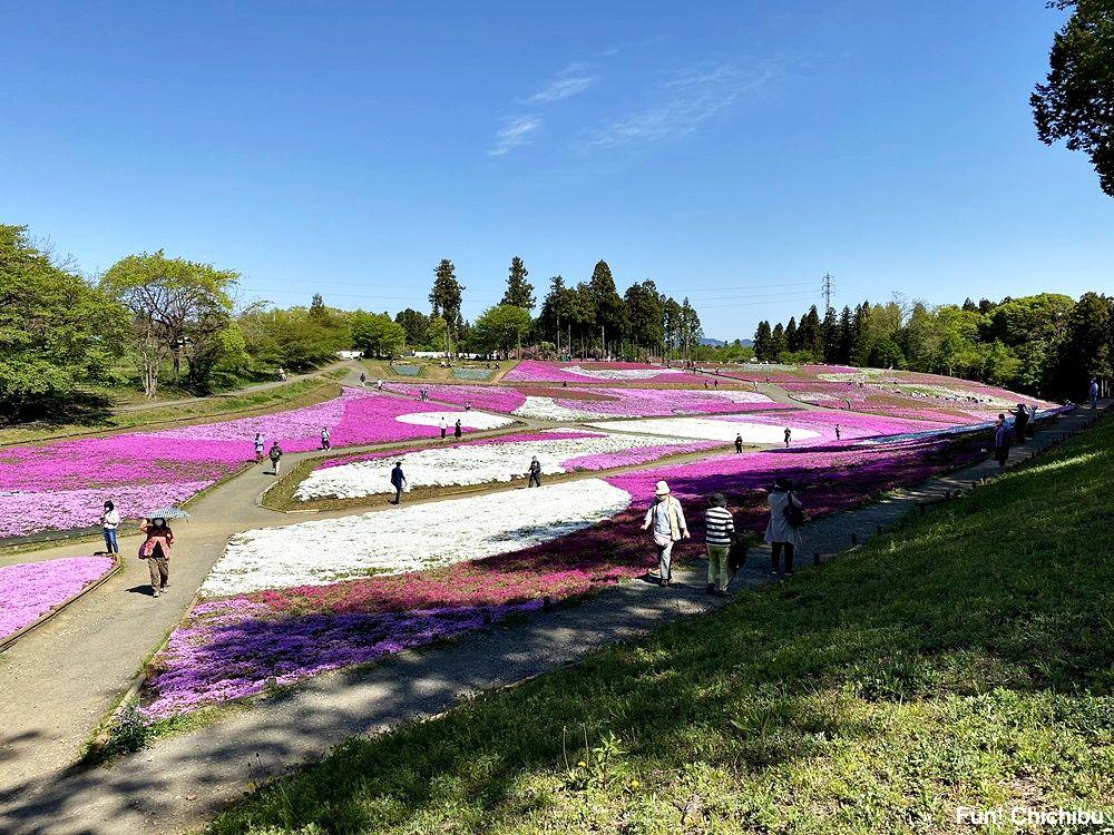20210422 芝桜の丘3