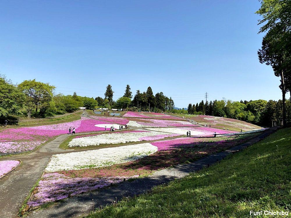 20210430_芝桜の丘2