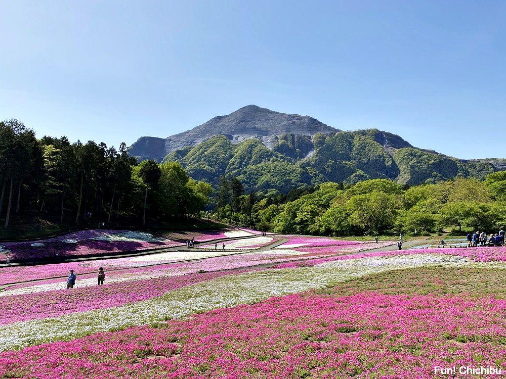 20210430_芝桜の丘1