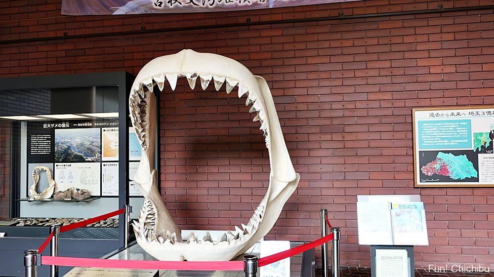 巨大サメの歯