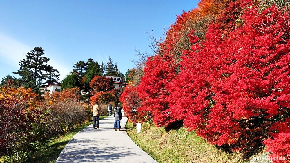 三峯神社の紅葉