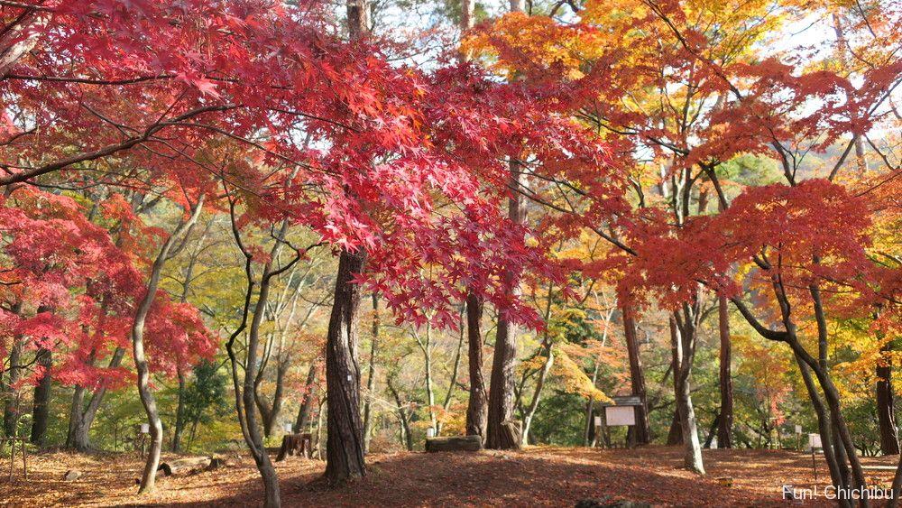 月の石もみじ公園の紅葉シーズンの様子