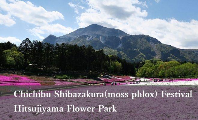 Chichibu Shibazakura(moss phlox) Festival