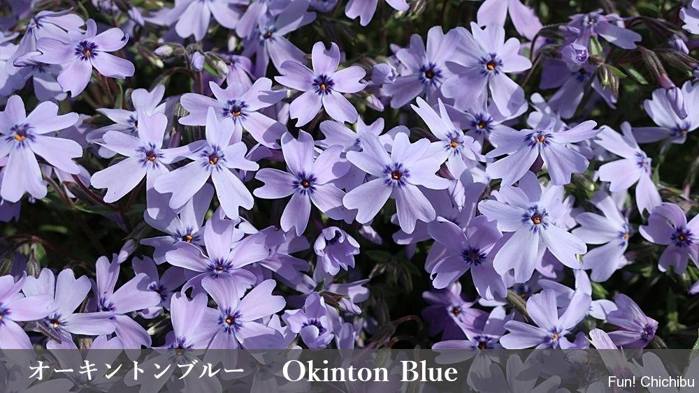 Okinton Blue