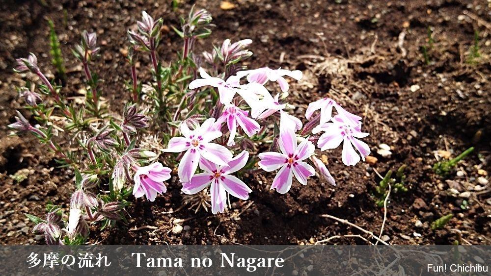 Tama no Nagare