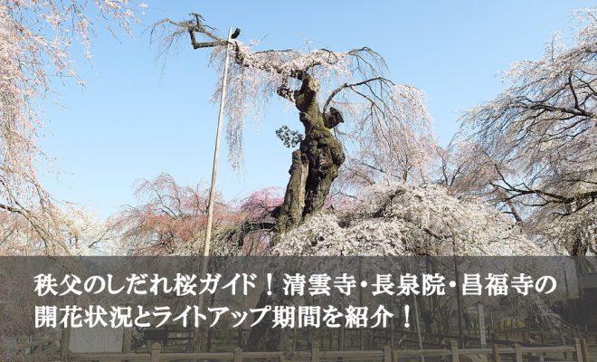 秩父のしだれ桜ガイド清雲寺・長泉院・昌福寺の開花状況とライトアップ期間を紹介