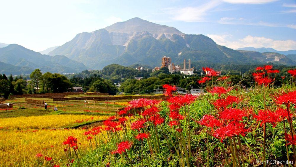 寺坂棚田の彼岸花と武甲山