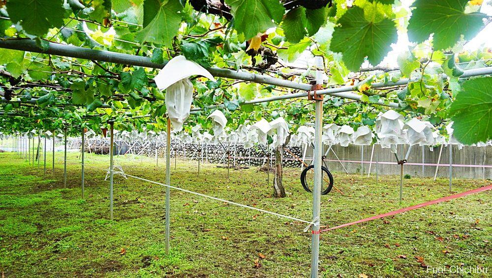 フルーツファームぶどう農園2