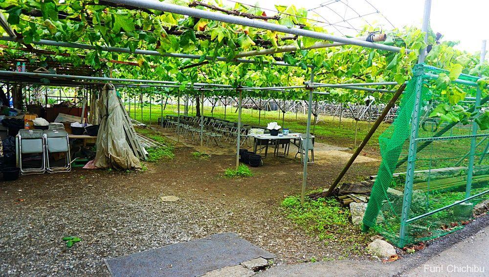 フルーツファームぶどう農園