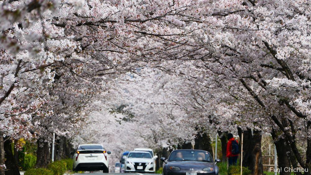 長瀞の北桜通り