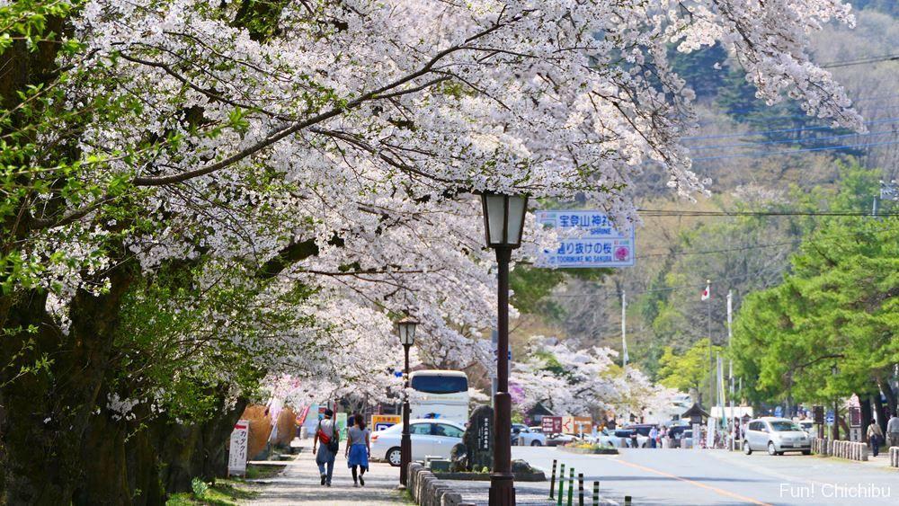 宝登山参道の桜