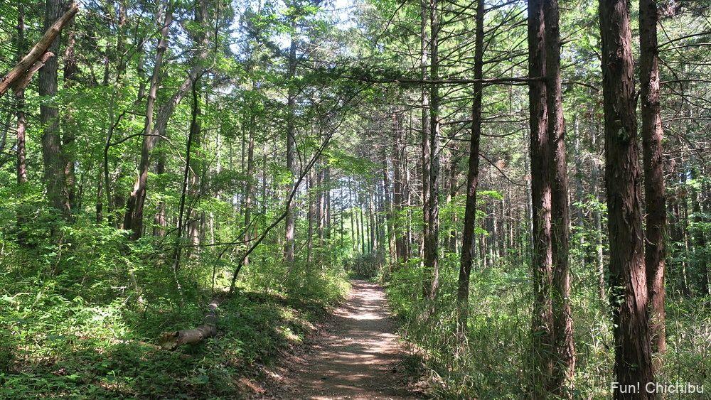 琴平ハイキングコース 武甲山登山口の碑から芝桜の丘への山道