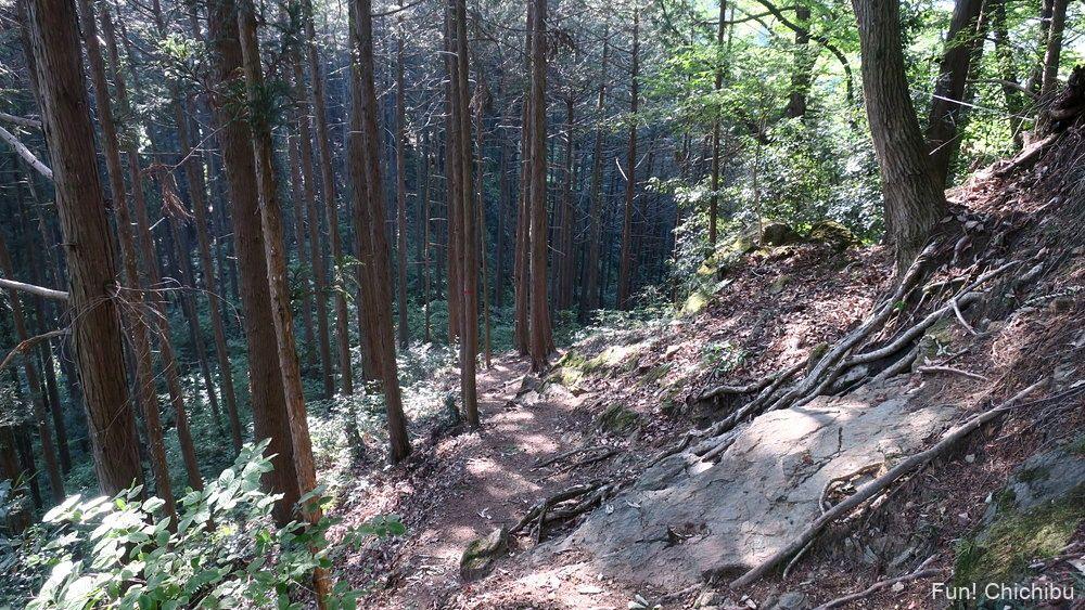 琴平ハイキングコース 鎖場付近の急斜面
