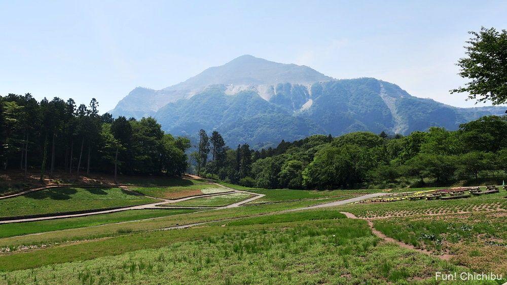 琴平ハイキングコース 芝桜の丘