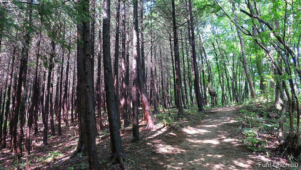 長瀞アルプス宝登山 人工林と自然林