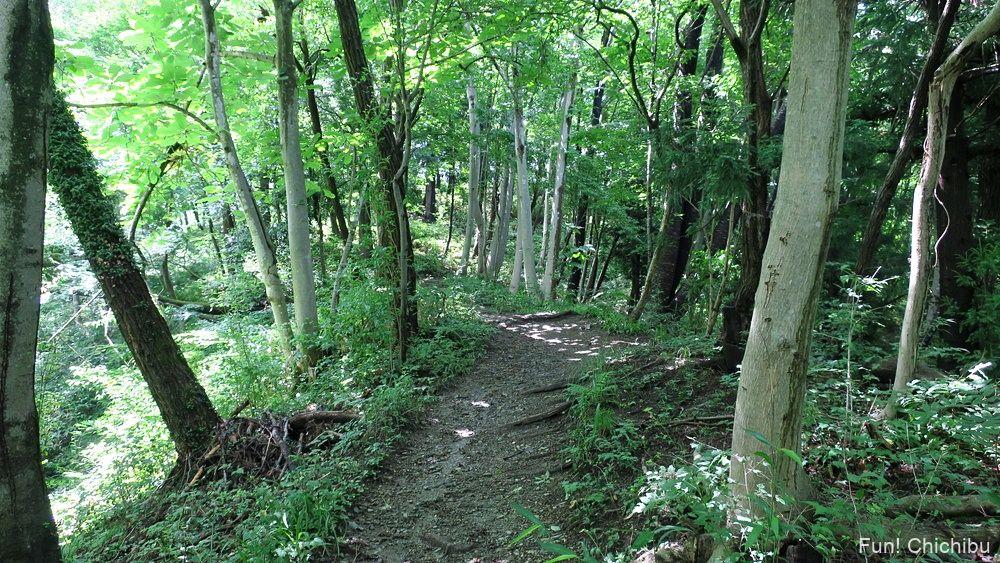 長瀞アルプス宝登山 ナラ沢峠へ向かう途中の登山道1