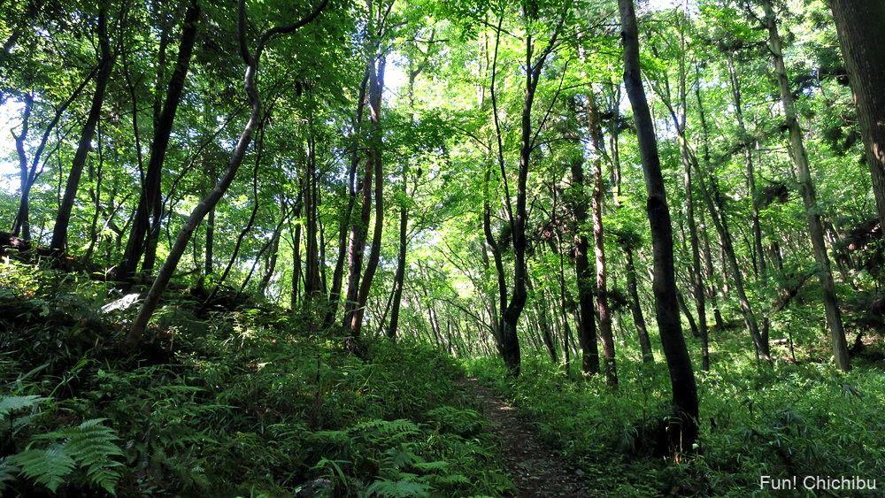 長瀞アルプス宝登山 万福寺付近の登山道
