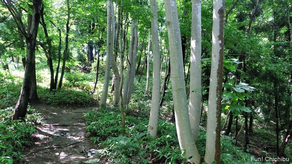 長瀞アルプス宝登山 ナラ沢峠へ向かう途中の登山道2