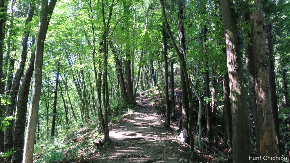 長瀞アルプス宝登山 坊山分岐へ向かう途中の登山道