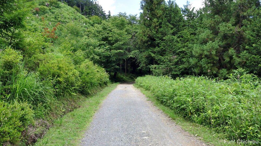 長瀞アルプス宝登山 長瀞遊歩道 途中の登山道1