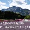 【2018年】秩父芝桜の丘(羊山公園)見頃・開花状況やアクセス・駐車場を紹介